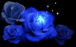 Hoa hồng xanh tại Nhật