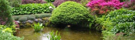 Vẻ Đẹp Vườn Nhật Bản