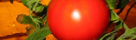 Cà chua giúp giảm béo