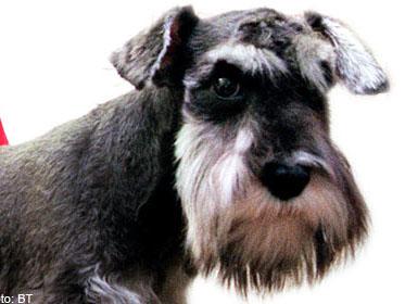 Đánh thuế để giảm phân chó