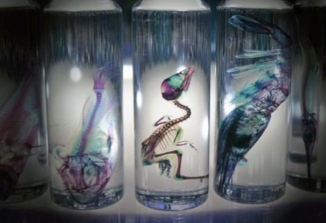 Nghệ thuật từ xác động vật