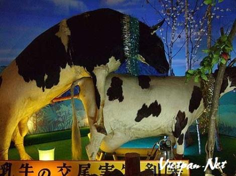 Bảo tàng sex động vật ở Nhật Bản