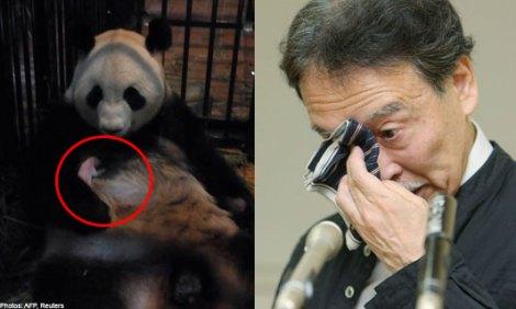 Cả nước Nhật đau buồn trước cái chết của chú gấu trúc con