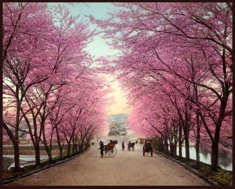 """Hình ảnh """"cực độc"""" về Nhật Bản xưa"""