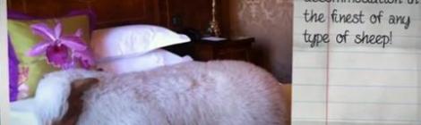 Khách sạn dành cho Cừu đầu tiên trên thế giới