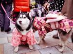 Thời trang cho Nhật
