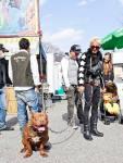 Thời trang cho Nhật,hình ảnh nhật bản,chó nhật,cún yêu,nhật bản,2012,động vật đáng yêu,tin tức nhật bản
