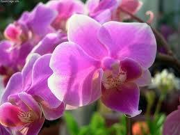 Hoa trong tiếng Nhật