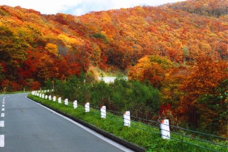 Cảnh đẹp mùa thu ở Nhật Bản