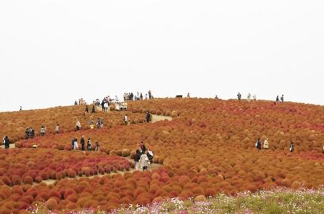 Thiên đường hoa suốt bốn mùa ở Nhật