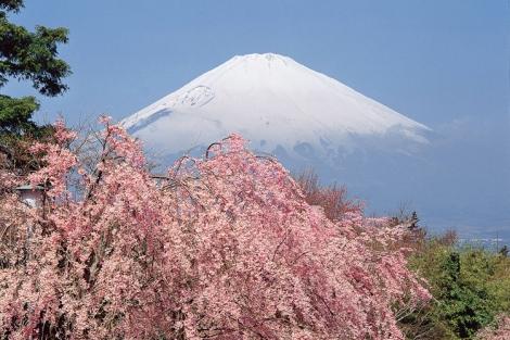 Bốn mùa tuyệt đẹp ở núi Phú Sĩ