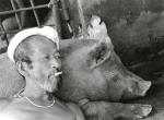 Gia tộc 10 năm nuôi Lợn