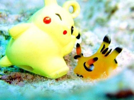 Sên biển giống hệt Pikachu