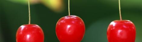 Những loại trái cây ngon nhất ở Nhật Bản