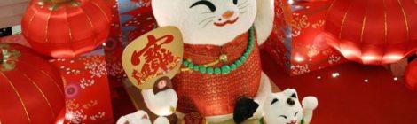 Lịch sử về chú mèo dụ khách Nhật Bản