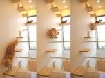 Mèo Nhật
