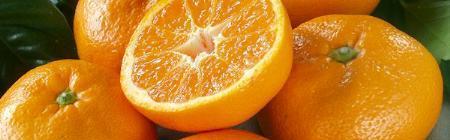 Quýt – trái cây vàng của Nhật Bản