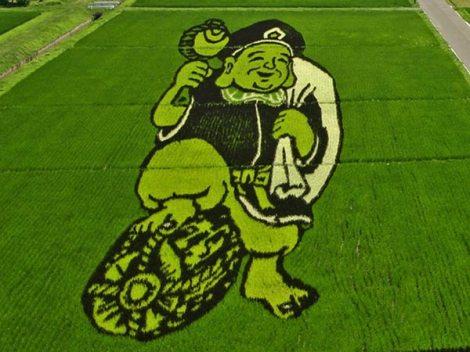 Cùng xem kiệt tác đặc sắc trên cánh đồng