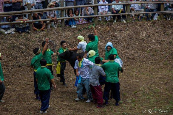 Chọi bò ở Nhật Bản