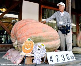 Bí ngô khủng nhất Nhật Bản