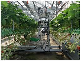 Robot thu hoạch Dâu Tây