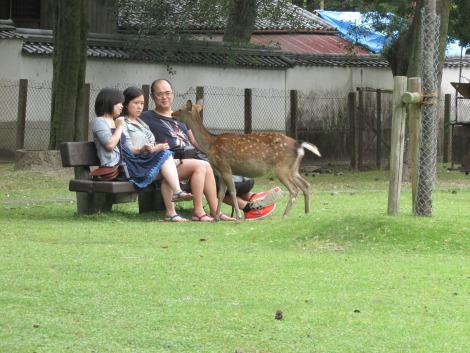 Chùm ảnh vui ở xứ sở Hoa Anh Đào