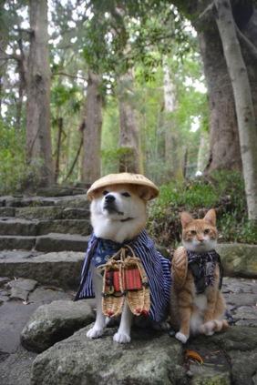 Hình ảnh ngộ nghĩnh của đôi bạn thân chó và mèoHình ảnh ngộ nghĩnh của đôi bạn thân chó và mèo