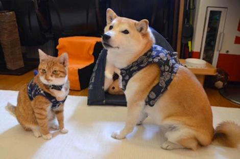 Hình ảnh ngộ nghĩnh của đôi bạn thân chó và mèo